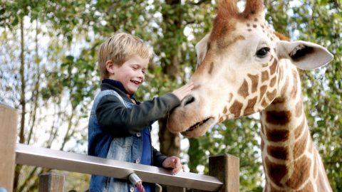 Mein Freund, die Giraffe 2017