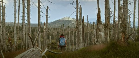 Der wilde Wald - 2021